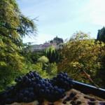 schiacciata grapes